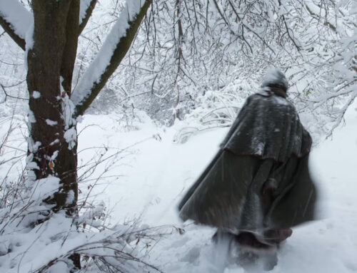 BAO legge per te   Il Capodanno del Bosco Vecchio